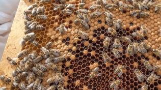 Bienen-Mädli