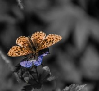 Schmetterling (1 von 1)