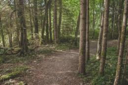 Waldweg (1 von 1)