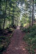 Waldweg1 (1 von 1)