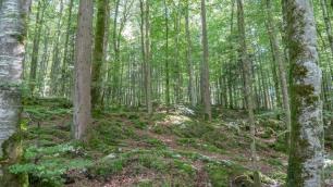 Wald (1 von 1)